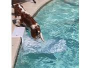 PoolPup Step in White