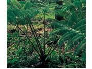 Passion Fruit (Lilikoi) Seeds, Red Ginger Starter Plant, Tree Fern Starter Plant, Combo Value Pack # 113888