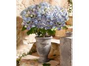 Pier Surplus Stoneware Cup Antique style Flower Accent Vase - Flowers Not Included 9SIA4YK1MB2581