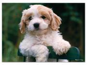 Precious Puppy 30 pcs. - Jigsaw Puzzle by Melissa & Doug (8923)