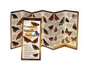 Common Butterflies New England