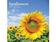 Sunflowers 2017 Square Plato 9SIA7WR52V9907