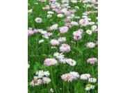 The Dirty Gardener Mix of Low Growing Grass and Flowers Lawn - 10 Pounds
