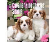 Cavalier King Charles Spaniel Puppies Mini Wall Calend by BrownTrout 9SIV0W74VR2287