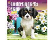 Cavalier King Charles Spaniel Puppies Wall Calendar by BrownTrout 9SIV0W74VR5548