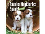 Cavalier King Charles Spaniel Puppies  Mini Wall Calen by BrownTrout 9SIV0W75UC7479