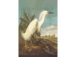 Buyenlarge 03556-0P2030 Snowy Egret 20x30 poster