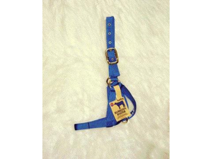 Hamilton Halter Company - Halter Cow Turn Out- Blue Yearling - 30DY BL