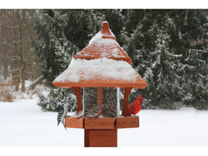 Songbird Essentials SE511 Century Bird Feeder