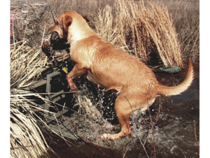 Great Day LP500HD Load-A-Pup HD For the HuntiN dog