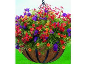 Woodstream HPF14-B 14 Inch English Flatwire Hanging Basket