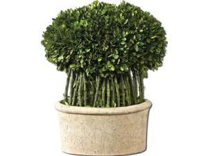 Uttermost 60108 Uttermost Willow Topiary Preserved Boxwood