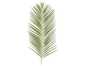 Autograph Foliages PR-2682 46 in. Areca Palm Branch, Tutone Green