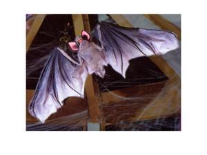 5' Posable Bat