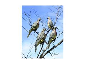Lucky Duck Single Dove - 13187NFLQUDL