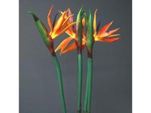 "Light Garden 01934 - 33"" Bird of Paradise Electric Lighted Branch (15 White Lights)"