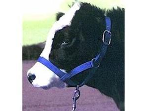 Halter - Cow Halter Turnout Blue