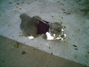 Kitty Holster Extra Small Black