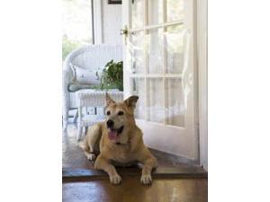 "Cardinal DRS Protect door from pet scratches- 33""x35"" DRS"