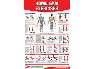 Productive Fitness Laminated Poster for Basic Home Gym Exercises (Upper Body)