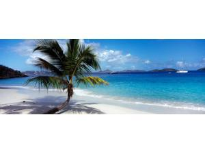 Palm tree on the beach, Salomon Beach, Virgin Islands National Park, St. John, US Virgin Islands Poster Print (27 x 9)