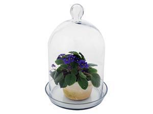 Glass Bell Jar Terrarium II