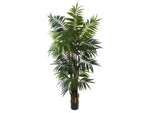 Bulb Areca Silk Palm Tree