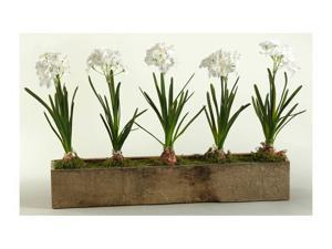 Paper Whites in Rectangle Wooden Planter
