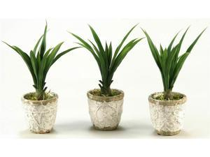 Lily Grass in Crackled Stoneware Pot - Set of 3