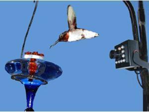 Hawk Eye High Definition Nature Cam Bird Watching Spy Video Camera