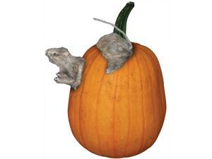 Rat Pumpkin Push In
