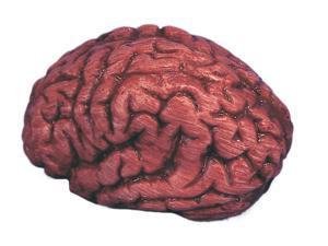 "Loftus Bloody Brain Halloween 6"" Decoration Prop, Red White"