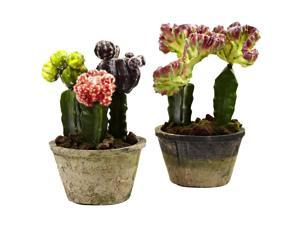 Nearly Natural Colourful Cactus Gardens Set of Two