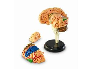 Learning Resources Human Anatomy Brain Model - 31 Piece