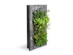 GroVert Living Chalkboard Wall Planter with Frame Kit