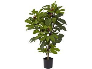 32? Fig Tree w/42 Lvs & 15 Figs