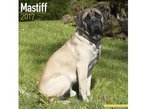 Mastiff Wall Calendar 2017 by Avonside