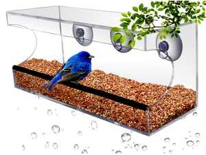 Planted Perfect Large Crystal Clear Window Suction Bird Feeder