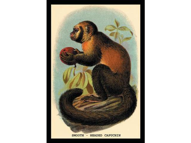 Buy Enlarge 0-587-15153-6P12x18 Smooth-Headed Capuchin- Paper Size P12x18