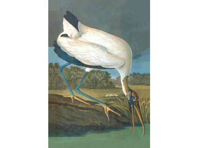 Buyenlarge - 03554-4CG28 - Wood Stork 28x42 Giclee on Canvas